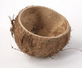 Coconut shell 16-18 cm
