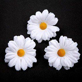 Daisy 12 pcs/pkg white