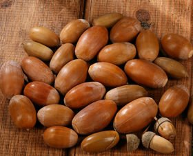 Dried acorns 24 pcs / pack