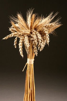 Dried natural grain 35-45cm BUKIET bundle decoration about 40 ears