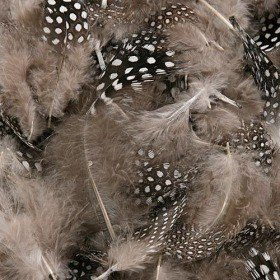 Exotic feathers - black in white dots (001)