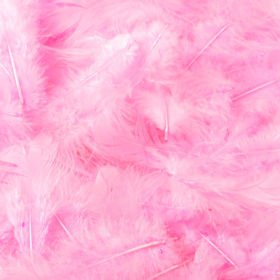 Feathers in box - dark pink