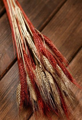 Grain, 30-40 ears, ca. 40 cm, brown-natural-gold