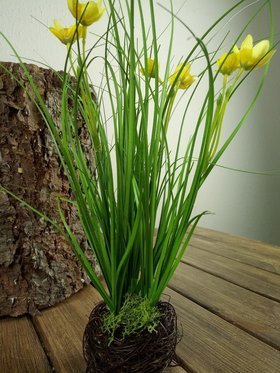 Grass with daffodils in a 30 cm nest