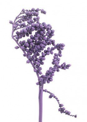 Light purple Canella, lacquered, 3 twigs
