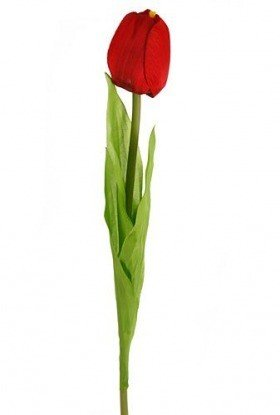 Long tulip, 68 cm, red