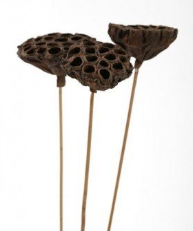 Lotus on stick diameter 8-10 cm 6 pcs/pkg