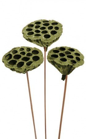 Lotus on stick dyed diameter 6-8 cm 6 pcs/pkg olive