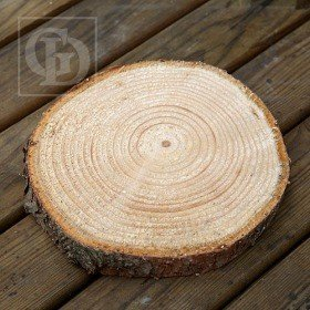 Medium slice of spruce wood, D 15-20 cm, T 2-4 cm