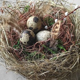 Natura nest with quail eggs