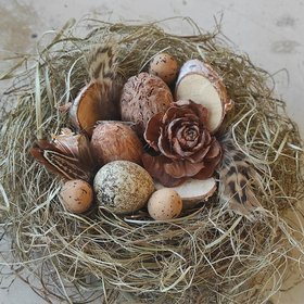 Natural nest, richly equipped, 10-12 cm