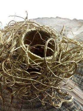 Natural nest with eggs on stick