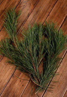 Natural pine, bunch of 3 twigs, ca.30cm