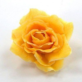 Product Rose 12 / SET bright yellow