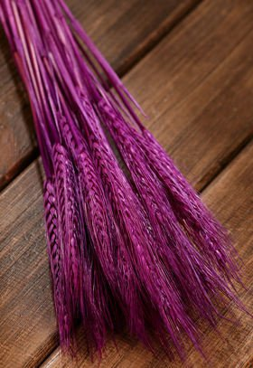 Purple grain, 30-40 ears, ca. 40 cm