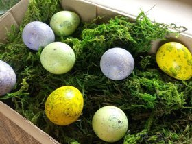 Quail eggs colored shells in the moss
