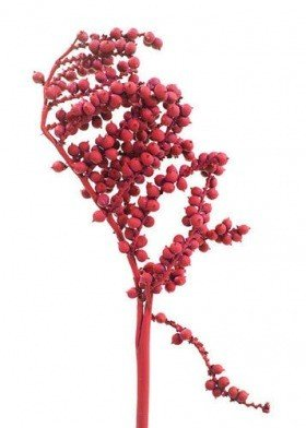 Red Canella, lacquered, 3 twigs