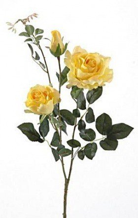 Rose, 3 pcs on a branch - yellow