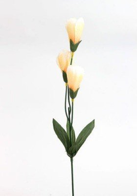 Set of 12 crocuses 35 cm - cream