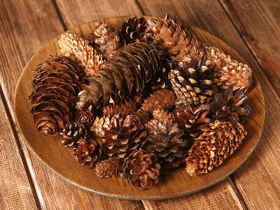 Set of dried cones: pine,pine,larch,douglas fir, beech 35-45 pcs.