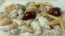 Shells and starfish 50 pcs / pack