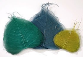 Skeleton leaves, 10-20 cm blue green 30 pcs/pkg