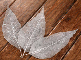 Skeleton leaves, long 20-30 cm silver 20 pcs/pkg