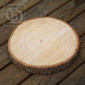 Slice of spruce wood D 20-25cm T 2-4cm