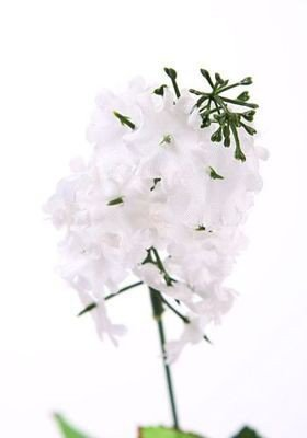 Sprig of lilac 48 cm - white