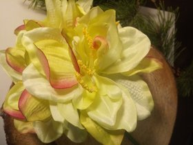 Two-colored amaryllis 4 flowers 54 cm