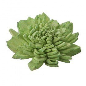 Zinia flowers, 3 cm, 24 pcs/pkg - light green