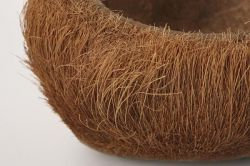 Coconut shell hair combed about 15-18 cm
