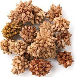 Mini kwiatki suszone 30g/op. - naturalne   | owoce, nasiona, łuski kwiaty suszone potpourri i świece ZIMA - OZDOBY ŚWIĄTECZNE NA BOŻE NARODZENIE \ świeczki, świeczniki, potpourri WIELKANOC 2020 \ wypełniacze wypełniacze WIELKANOC ART WIOSENNE NOWOŚCI 1 SUSZONE ROŚLINY \ SUSZ NATURALNY LATO \ świece świeczniki potpourri - Hurtownia Florystyczna Internetowa - Artykuły Florystyczne - Kwiaty sztuczne